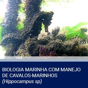 BIOLOGIA MARINHA COM MANEJO DE CAVALOS-MARINHOS (<i>Hippocampus sp</i>)